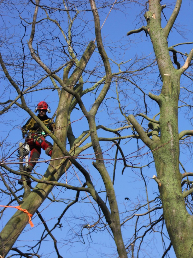 Avancerad trädnedtagning