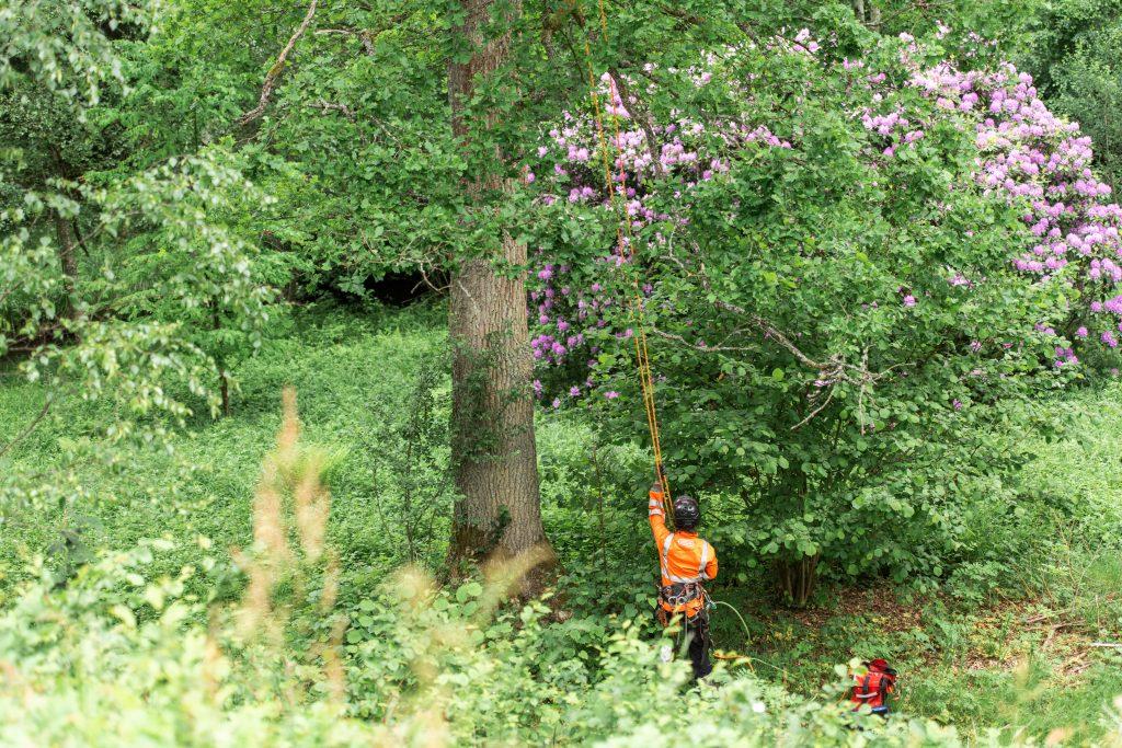 Trädfällning Skåne Höör Hörby